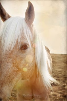"""Let your horse teach you about yourself, for you may be at the age where no one else can."""