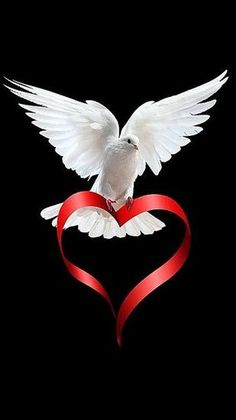 Red heart ♥ God sent his love through Jesus by the Holy Spirit. I Love Heart, Peace And Love, My Love, Perfect Peace, Tattoo Oma, Saint Esprit, White Doves, Jesus Loves You, Beautiful Birds
