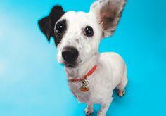 4 medidas pra diminuir a ansiedade do seu cão