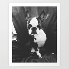 Lulo's wink. Art Print by Lulo The Boston Terrier - $19.99
