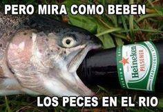 Pero mira como beben los peces en el rio