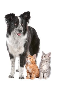 Pet-Proofing Your home.   #petproofhome #care #pets #cats #kittens #dogs #puppies #safety #home