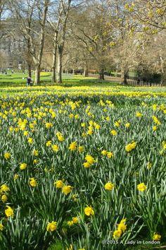 Green Park.Londres