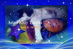 Domino looks sound asleep! So cuddly looking. Along with the twikling stars and the man in the moon Astrology Websites, Taurus Bull, Poster Boys, Cat Signs, Cat Birthday, Cat Food, Cat Art, Zodiac, Kitty
