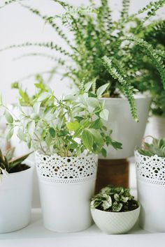 Going Green: How to Use Bontanicals Alongside Your Wedding Flowers and Décor