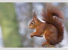 Chipmunks, Animals And Pets, Kangaroo, Fox, Squirrels, Pencil Art, Images, Nature, Inspiration