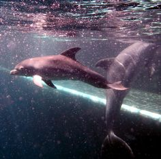 Dolphin mama Frida and her sweet one month old son.