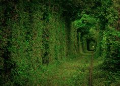 Tunnel Of Love Ukraine - Amazing World Places Travel Guide To See Beautiful World Tunnel Of Love Ukraine, Beautiful World, Beautiful Places, Landscape Photos, Tour Guide, Pathways, Tourism, Nature Photography, Country Roads