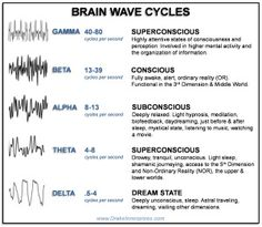 Levels of Consciousness in the Dimension & the Brain Wave States – Bear With Me States Of Consciousness, Levels Of Consciousness, Brain Facts, Brain Anatomy, Emotional Awareness, Brain Science, Spirit Science, Life Science, Computer Science