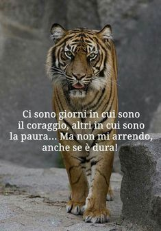 Ci sono giprniente che Common Quotes, Wise Quotes, Inspirational Quotes, Italian Life, Pokemon, Richard Gere, Beautiful Mind, Dalai Lama, Linkin Park