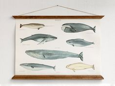 Affiche a2 baleines toile nouvelle taille moyenne - illustration de graphique illustration inspiration vintage fait main mur pédagogique WAPA2002