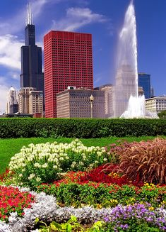 5f5c4fccd9fd4b Chicago - Grant Park Flowers   Sears(Willis) Tower