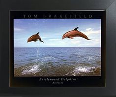 Bottlenose Dolphins Jumping In Air Ocean Animal Nature Wa... https://www.amazon.com/dp/B01N4DTHH0/ref=cm_sw_r_pi_dp_x_BCdBzbV7SF57H
