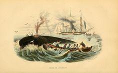Bernard Germain de Lacépède: Histoire naturelle des quadrupèdes ovipares, serpents, poissons et cétacées (1825)