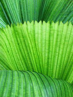Beautiful tones of green