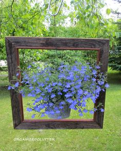 One of my first outdoor posts this season was a framed lobelia plant. I had just found this square frame for $11.         This is early May...