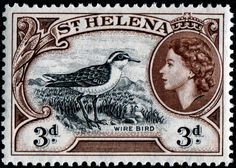 Helena Plover stamps - mainly images - gallery format Old Stamps, Vintage Stamps, Vintage Postcards, Saint Helena Island, St Helena, World Birds, Stamp Catalogue, Bird Perch, Old Coins