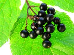 Elderberry syrup natural way to help with the flu and other illnesses.