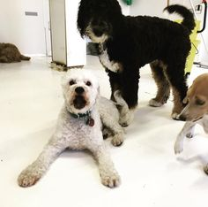 """Sam says """"Happy Monday!"""" He and his friends hope you get the chance to start your week off with as much fun as they are!"""