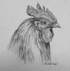Rooster, by Emily Perrrone, graphite. 2015