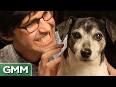 What Dogs Are Actually Thinking - Good Mythical Morning