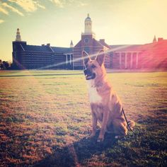 10 Reasons Why You Should Have a Dog in College, by #Baylor student Taylor McNamara.