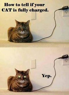 Charged?
