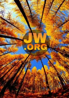 JW.ORG #jw.org #jw #a_soldier_of_Jah #asoldierofjahartě
