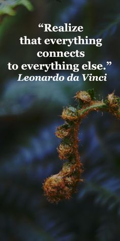"""Realize that everything connects to everything else.""  Leonardo da Vinci"
