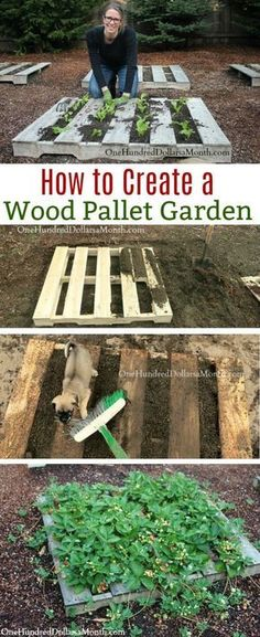Pallet Gardening - How to Create a Wood Pallet Garden - One .- Pallet Gardening – How to Create a Wood Pallet Garden – One Hundred Dollars a Month Wood Pallets, Wood Pallet Gardening, Gardening with Wood Pallets, Wood Pallet, Wood Pallet Garden - Diy Pallet Projects, Pallet Ideas, Garden Projects, Garden Ideas, Garden Boxes, Pallet Gardening, Container Gardening, Organic Gardening, Palet Garden