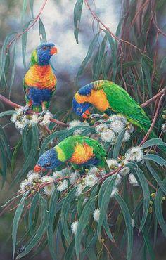 Rainbow Lorikeets-Rainbows and Red Collared Lorikeets on Flowering GumbyElizabethCogley