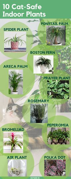 Non-Toxic Cat-Safe Houseplants Find out the top 10 cat-friendly indoor plants.