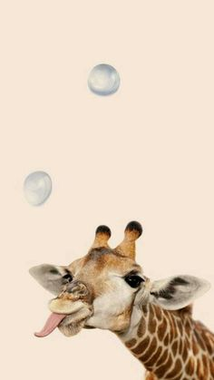 giraffe with bubble wallpaper - Luxury Cars - . - Playful giraffe with bubble wallpaper – Luxury Cars – -Playful giraffe with bubble wallpaper - Luxury Cars - . - Playful giraffe with bubble wallpaper – Luxury Cars – - Cute Wallpaper Backgrounds, Animal Wallpaper, Wallpaper Iphone Cute, Disney Wallpaper, Cute Wallpapers, Wallpaper Awesome, Iphone Backgrounds, Cute Creatures, Beautiful Creatures