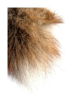 coyote tail (mary jo hoffman)