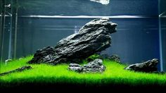 It's difficult knowing where to start with so many aquarium kits on the market. And all you want is to find the best aquarium kit for your needs. Aquascaping, Aquarium Aquascape, Planted Aquarium, Aquarium Landscape, Saltwater Aquarium, Freshwater Aquarium, Aquarium Fish, Aquarium Design, Shrimp Tank