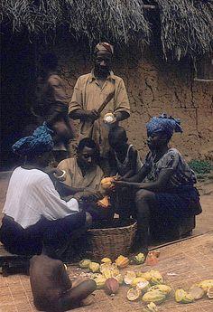 nigerianostalgia:   Yoruba farmer, with his family members, removing seeds from cocoa podsAdamo village, Nigeria.(1959) Click for more Vintage Nigerian photos