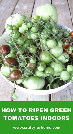 Growing Tomatoes Tips How To Ripen Green Tomatoes Indoors - Store your green tomatoes indoor at the end of growing season. Here are four tips on how to do it so you can enjoy these tomatoes later on in the fall or winter. Ripen Green Tomatoes, Growing Tomatoes Indoors, Tips For Growing Tomatoes, Growing Tomato Plants, Growing Tomatoes In Containers, Baby Tomatoes, Dried Tomatoes, Cherry Tomatoes, How To Ripen Tomatoes