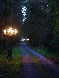 "Portlick Castle, Ireland.  ""The Long Driveway at Dusk"".  Taken by me. Driveway Landscaping, Modern Landscaping, Outdoor Landscaping, Fantasy Landscape, Landscape Design, Landscape Plans, Landscape Lighting, Outdoor Lighting, Driveway Lighting"