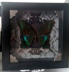 Real Gothic Butterfly Taxidermy Swallowtail Insect by RevenantArts