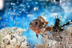 Fish Fish, Pets, Photography, Animals, Photograph, Animales, Animaux, Pisces, Fotografie