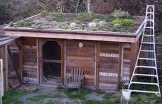 Lloyd's Blog: Chicken Coop Living Roof and Happy Chickens