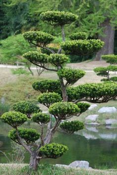 Niwaki : Ayez la zen attitude