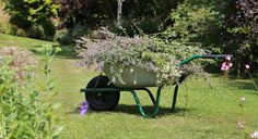 Tips on buying a wheelbarrow A wheelbarrow may not be the most glamorous thing you will ever buy for your garden. For most of us it falls into the same category as most garden tools: spend as little as possible and go for what looks like the best offer. Some...