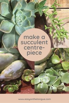 Want to bring the outdoors into your house? Try succulents.More tips and how to create a centerpiece with succulents. Felt Succulents, Succulent Centerpieces, Good Tutorials, Centre Pieces, Cool Diy Projects, Diy Tutorial, Diy Home Decor, Hacks, Diy Crafts