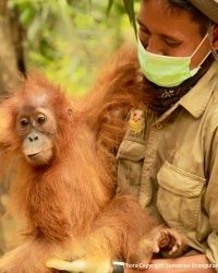 Help Provide Full Vet Care for 4 Orangutans in the Field Read more at http://greatergood.com/thanks/#PlOaxr9U3iOQGIRr.99