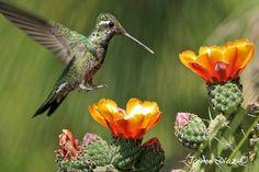 flor del nopal - Buscar con Google