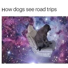Doggo On Tour Time     http://Space.OnlineClock.net  #DogsOfInsta #Animals #DogsOfficialDog #Dogs #DogsLover #PetSitter #DogOwners #DogLovers #DogsOfInstagram #Dogstagram #FunnyAnimals #DogsOnInstagram #DogsAreBetterThanPeople #Doggo #DogsLover #Pet #Pets #Car #Cars #Automotive #CarSpotter #Driving #Carstagram