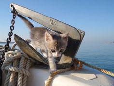 cat sea