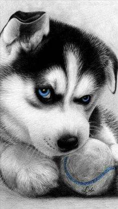 Wonderful All About The Siberian Husky Ideas. Prodigious All About The Siberian Husky Ideas. Realistic Animal Drawings, Pencil Drawings Of Animals, Animal Sketches, Drawing Animals, Sick Drawings, Cute Puppies, Cute Dogs, Dogs And Puppies, Doggies