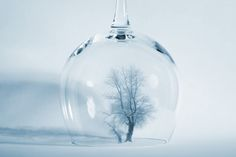 Tree In Glass by Andreas Kardin